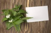 Close up of day-nettle and blank paper or letter — Stock Photo