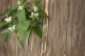 Close up of day-nettle — Stock Photo