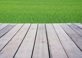 Wood terrace on the lake,Cheow Lan lake, Khao Sok National Park, Thailand — Foto Stock