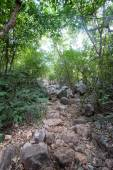 Walkway in Mountains ,Samroiyod nation park, Thailand. — Stock Photo