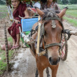 INWA,MYANMAR-JULY 31,2015 : Unidentified carriage of passengers and carrying supplies the local road runs along to a village on July 31,2015 in Inwa ancient city,Mandalay State in Middle of Myanmar. — Stock Photo #80181476