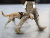 Canine service dog on a city street intentional blur — Stock Photo