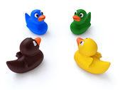 Diversity Ducks — Stock Photo