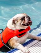 Dogs Swimming in Public Pool — Stockfoto