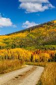 Fall in Steamboat Springs Colorado — Foto Stock