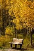 Fall in Steamboat Springs Colorado — Stockfoto