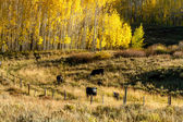 Fall in Steamboat Springs Colorado — Stock Photo