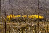 Fall in Steamboat Springs Colorado — Zdjęcie stockowe