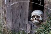 Halloween Skulls and Decorations — Stock Photo