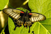 Butterfly Varieties at Botanical Gardens — Stock Photo