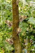 Butterfly Varieties at Botanical Gardens — Stock fotografie