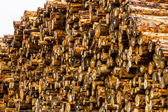 Logging Industry Log Yard — Stock Photo