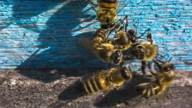 Group of bees chasing alien — Stock Video