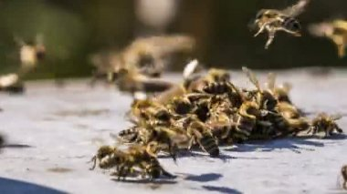Swarm of bees fighting with aliens — Stock Video