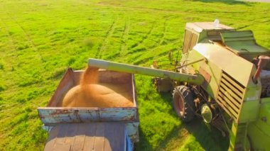 AERIAL VIEW. Combine Harvester In Action On Wheat Field, Unloading Grains — Stock Video