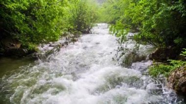 Rapid Mountain River Flowing Down In Fresh Green Forest — Stock Video