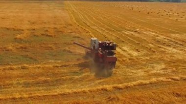 Working Harvesting Combine In The Field Of Wheat — Stock Video
