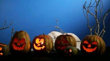 Black Cat Near Halloween Pumpkins — Stock Video