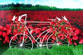 Red paper poppies bike. — Stock Photo