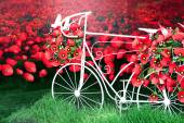 Mohn-Fahrrad rot Papier. — Stockfoto