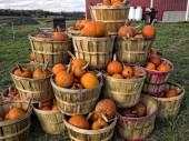 Bushels of Pumpkins — Stock Photo