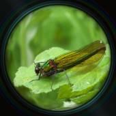 Green dragonfly on leaf in objective lens — Foto de Stock