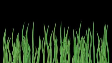 Waving water grass generated seamless loop video with alpha matte — Stock Video