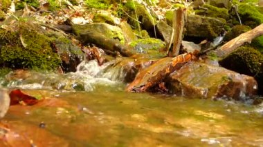 Small creek in forest — Stock Video