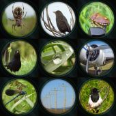 Set of camera lens views — Zdjęcie stockowe