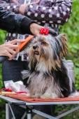 Hairdresser for dogs — Stock Photo