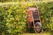 Rusty Wheelbarrow — Stock Photo