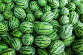 Many green sweet watermelon group — Stock Photo