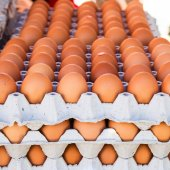 Egg in carton box package — Stock Photo