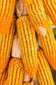 Dried corn to reduce moisture — Stock Photo