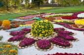 Flower bed in a shape of an apple with colorful chrysanthemums. Parkland in Kiev, Ukraine. — Stock Photo
