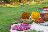 Flower beds in a shape of an apples with colorful chrysanthemums. Parkland in Kiev, Ukraine. — Stock Photo