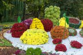 Flower beds in a shape of different fruits with colorful chrysanthemums. Parkland in Kiev, Ukraine. — Stock Photo