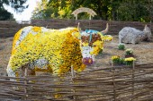 Flower bed in a shape of a cow with colorful chrysanthemums. Parkland in Kiev, Ukraine. — Stock Photo