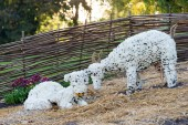 Flower beds in a shape of farm animals with colorful chrysanthemums. Parkland in Kiev, Ukraine. — Stock Photo