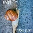 Inspirational quote with words you dont have to go fast you just have to go. Large snail crawling on a stone wall. — Stock Photo #77464984
