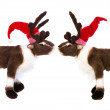 Animal love: two reindeer or elk with santa hat for christmas de — Stock Photo #54199991