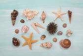 Arrangement of different shells and starfishes on blue or turquo — Stock Photo