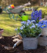 Spring: Gardening in autumn with flowers of primula, hyacinth an — Stock Photo