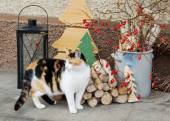 Outdoor christmas decoration with a cat in the front. — Stock Photo