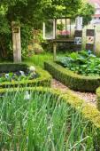 Old romantic farm garden in the summer. — Stock Photo