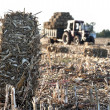 Tractor collecting haystack — Stock Photo #55688925