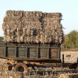 Tractor collecting haystack — Stock Photo #55688981