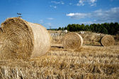 Straw bales in a farmland — Stockfoto
