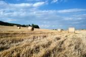 Straw bales in a farmland — Fotografia Stock