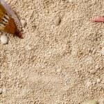 Sea shells on the sand. — Stock Photo #78678380
